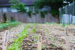 seedleaf garden